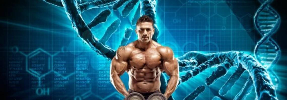 В чем секрет стероидов?
